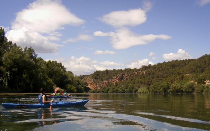 Birdwatching en kayak  Observará pájaros mientras remeu por el río Ebro