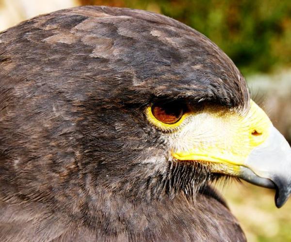 Visita a Pratdip y el Centre Horus de fauna salvaje